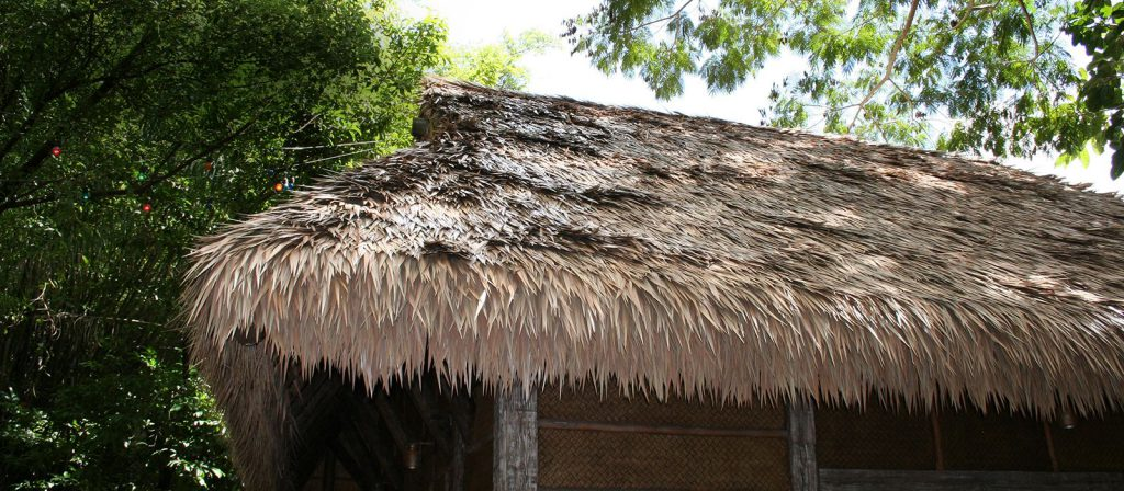 Tropical Palms: Ancient Crops Facing Modern Problems