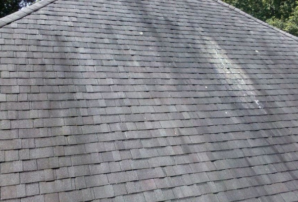 What Are Those Black Stains On So Many Shingled Roofs?