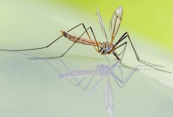 Repel Mosquitoes From Your Outdoor Cabana Or Gazebo Area Naturally, So You'll Enjoy Your Evenings