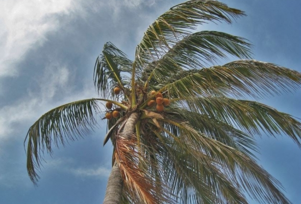 Hurricane Damage? How To Build Stronger Roofs In Tropical Areas