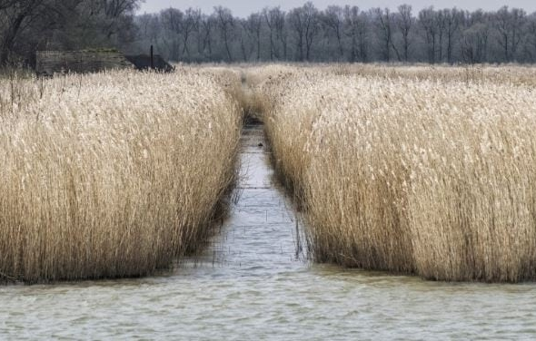 Eco-Minded Consumers Prefer Endureed Synthetic Water Reed For Thatched Roofs
